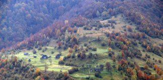 У гірських районах Карпат уже висадили 3,5 мільйона дерев