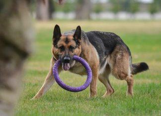 Мін'юст продає породистих собак боржників. Фото