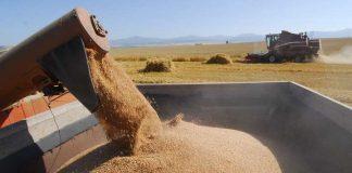 Попри загрозу неврожаю Україна вивозить продовольство шаленими темпами. Свіжі дані