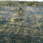 Сильні заморозки цієї ночі пошкодили сади та городину мешканців Франківщини: фото
