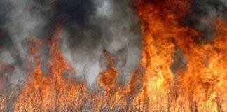 На Прикарпатті знову горить суха трава та стихійні сміттєзвалища