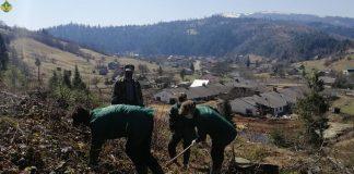 В Карпатах відновлюють високогірні ліси - вже висаджено понад 3 мільйони дерев