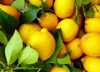На Прикарпаття прибули небезпечні лимони із Туреччини