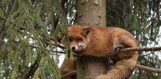 Цими вихідними Галицький національний парк знову відкриває двері для відвідувачів