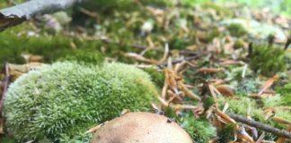 На Прикарпатті у розпалі грибний сезон: фотофакт