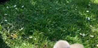 Як лебедина малеча, котра оселилась у франківському парку, приймаємо сонячні ванни: милі фото