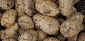 Війна чи бізнес? Україна нарощує імпорт російської картоплі. Дані митниці