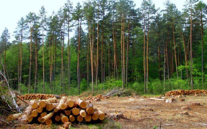 Службова недбалість на понад 4 мільйони: прокуратура повідомила про підозру прикарпатському лісівнику