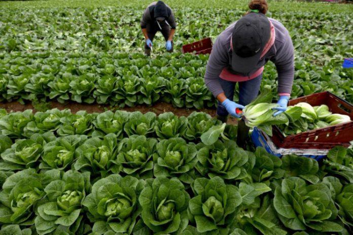 У Чехії без українських сезонних працівників агробізнес під загрозою (відео)