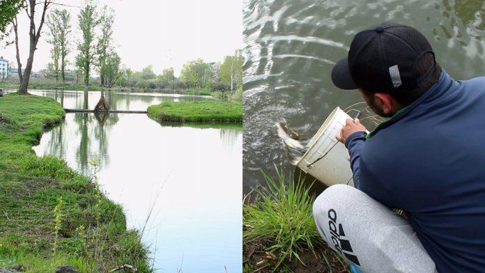 У коломийське озеро запустили форель: відео