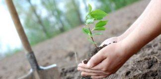У Слобідському лісництві висадять майже 11 тисяч сіянців дерев