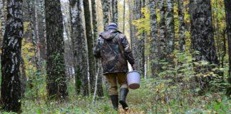 Поліція розшукала літнього прикарпатця, який заблукав у лісі: фото