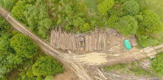 """""""Лисі"""" гори. В мережі показали наслідки масштабної вирубки лісів У Карпатах: фото"""
