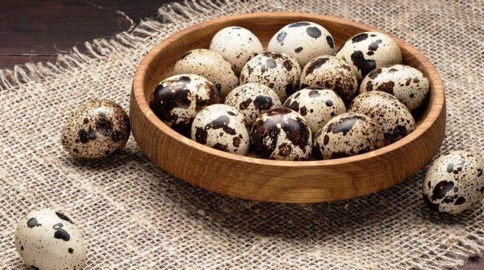 Перепелині яйця: корисні властивості і чому їх треба їсти