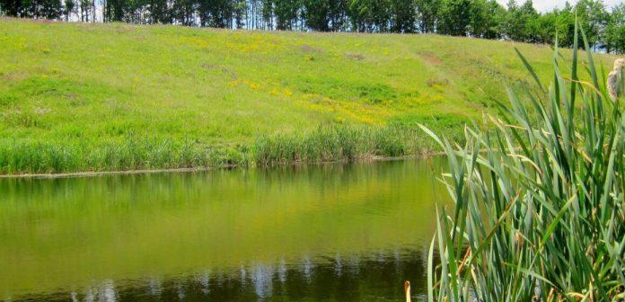 Прибережні землі площею 2 га на Прикарпатті визнали незаконно привласненими