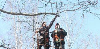 Незабаром у Івано-Франківську почнуть діяти правила обрізки дерев