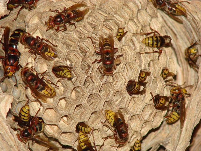 Франківські надзвичайники рятували мешканців міста від шершнів та бджіл