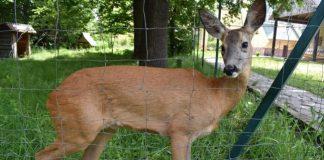 Мешканців Франківщини просять не забирати маленьких диких тварин з лісу до себе додому