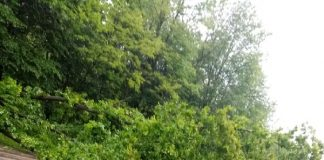 На трасі Івано-Франківськ - Калуш дерево впало на дорогу і перекрило дві смуги руху: фото