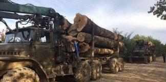 На Прикарпатських дорогах побільшає лісовозів завантажених деревиною