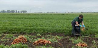 Чеські фермери готові оплачувати робітникам з Прикарпаття тести на COVID-19