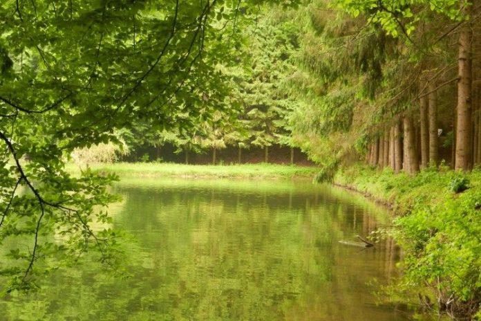 Одній з громад на Прикарпатті повернули землю біля озера вартістю понад пів мільйона