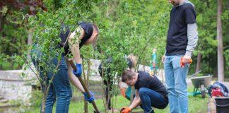 Скільки дерев зрізано і скільки посаджено у Івано-Франківську цього року
