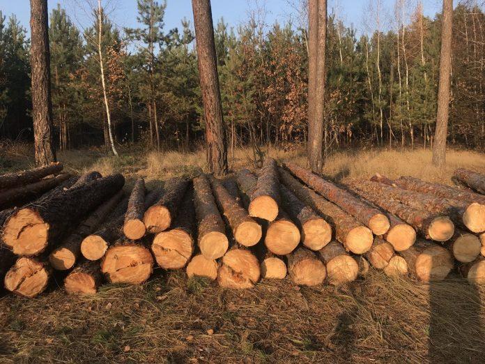 ДБР розслідує кримінальну справу прикарпатського депутата, через незаконну вирубку лісу