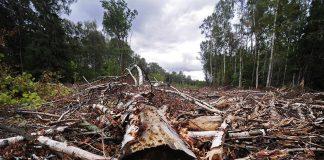 На Франківщині незаконно вирубали дерев на суму понад 2 мільйони гривень