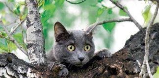 Прикарпатським рятувальникам довелося знімати з дерева кота