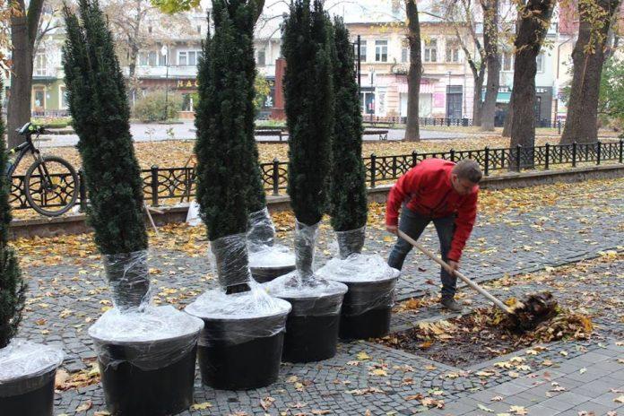 Озеленення міста: у Франківську з'явиться майже 2000 нових дерев