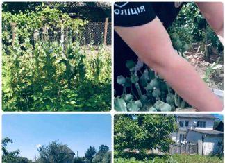 Літня прикарпатка займалась вирощуванням снодійного маку