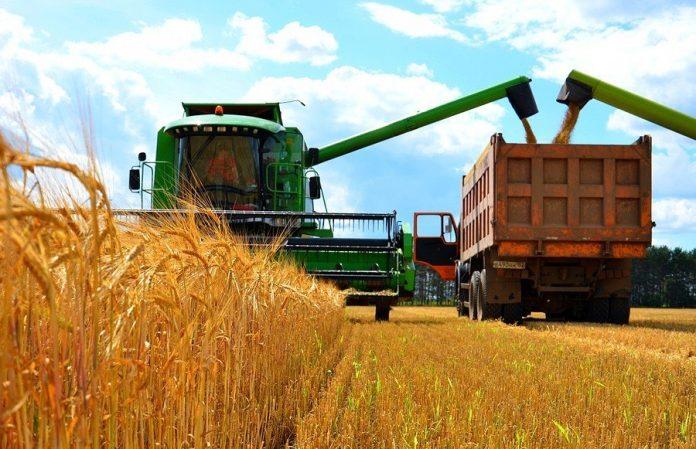 Картопля, пшениця та соя: як збільшились посіви сільгоспкультур на Прикарпатті