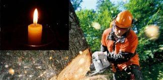 Через нещасний випадок на Прикарпатті загинув працівник Укрзалізниці - на нього упало дерево