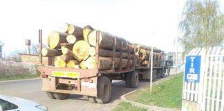 На Прикарпатті затримано вантажівку із лівим лісом