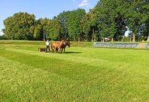 Пара коней та фірман-садівник: як у Тисмениці готують до матчу футбольне поле