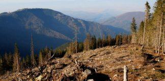 Прикарпатців закликають повідомляти про факти незаконної вирубки лісів