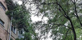 На БАМі через негоду дерево впало на п'ятиповерхівку