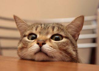 """Калушани повідомляють про """"котячого"""" живодера, який знущається над тваринами"""