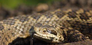 В Прикарпатському містечку змія заповзла до під'їзду житлового будинку