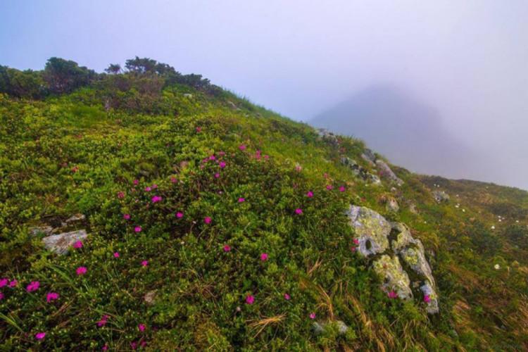 Якими мінливими й водночас красивими можуть бути краєвиди на вершинах Карпат: неймовірні фото