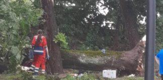 Біля міського озера величезне дерево впало на хлопця - його забрала швидка