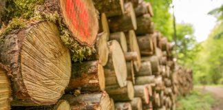 Скільки податків цьогоріч сплатили лісогосподарські підприємства Прикарпаття