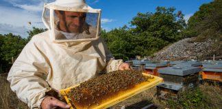 Медова справа: на Тисмениччині активно розвивається бджільництво