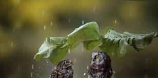 Сьогодні на Прикарпатті прогнозують грози та короткочасний дощ