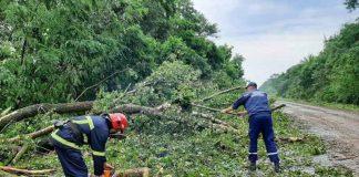 Негода повалила декілька дерев на Івано-Франківщині
