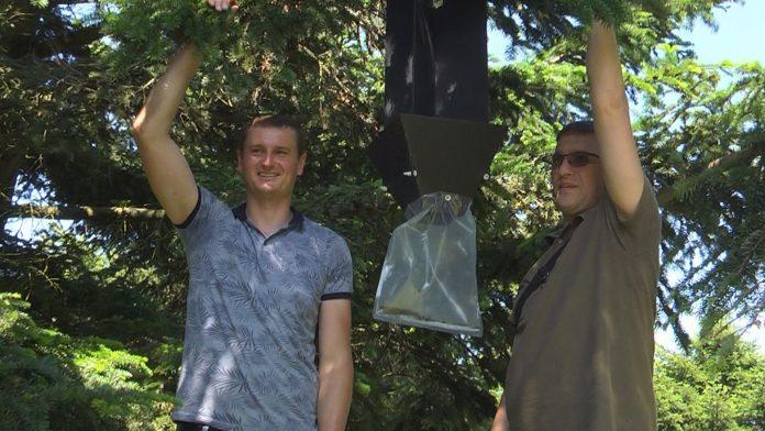 На Коломийщині взялися встановлювати феромонні пастки ВІДЕО