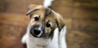 """""""Дім Сірка"""" просить небайдужих допомогти з купівлею спецапарату, що полегшить доглядь за тваринами"""
