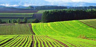 За оборудки із землею судитимуть ексголову сільради на Прикарпатті