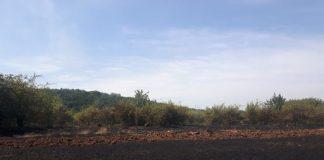 У прикарпатського агропідприємства за нез'ясованих обставин згоріло 2 гектари пшениці